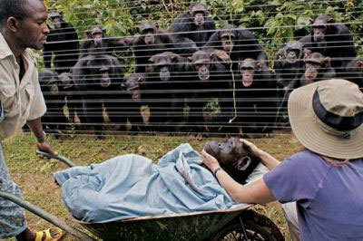 "Quoting from the source: ""Lying in the wheelbarrow is the body of Dorothy, a chimpanzee who died suddenly of natural causes; the people in the scene are preparing to bury her. Behind the fence is a quiet gathering of her friends."""